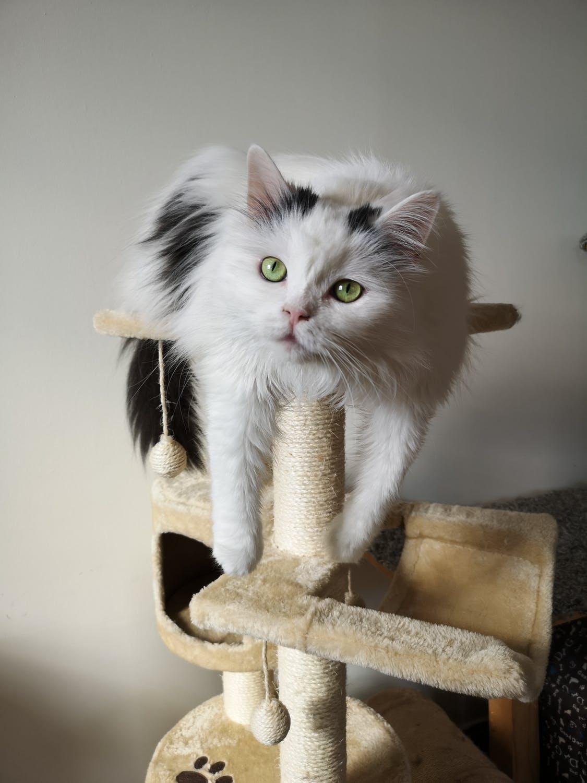 Arbre A Chat A Faire Maison le nouvel arbre à chat , comparatif et avis - zone led